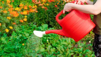 Planten hebben een hekel aan een koude gietbeurt
