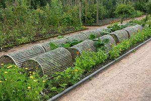Bescherm groenten tegen insecten