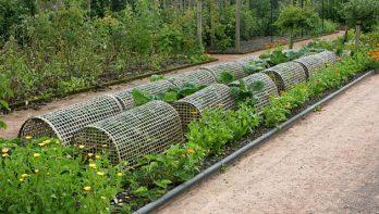 Bescherm groenteplanten tegen schadelijke insecten