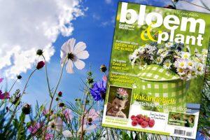 Bloem & Plant augustus