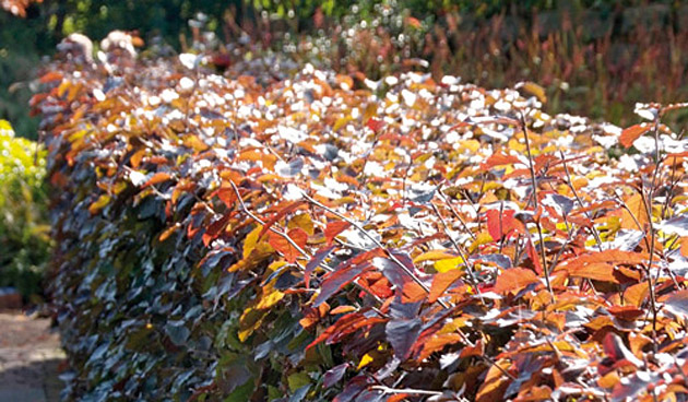 Hagen planten in de herfst: welk type kies je?