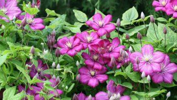 Vermeerderen via afleggen: makkelijk meer planten