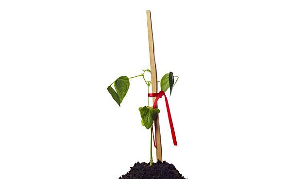 Vijf tips tegen het omvallen van planten