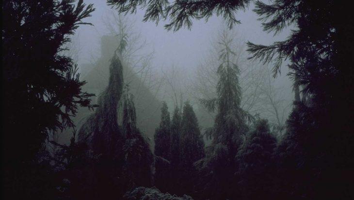 Sequoiadendron giganteum 'Pendulum'