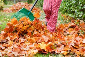 Bladeren opruimen
