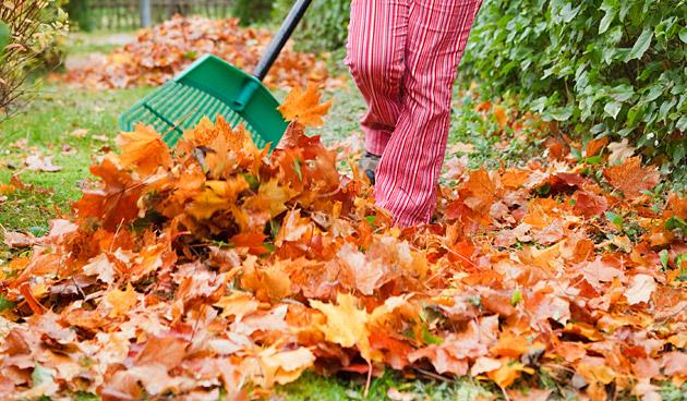 Wat te doen met afgevallen blad in de herfst?