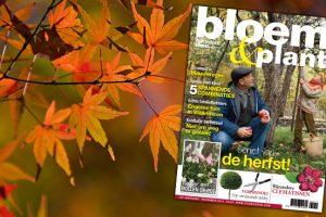 Bloem & Plant november