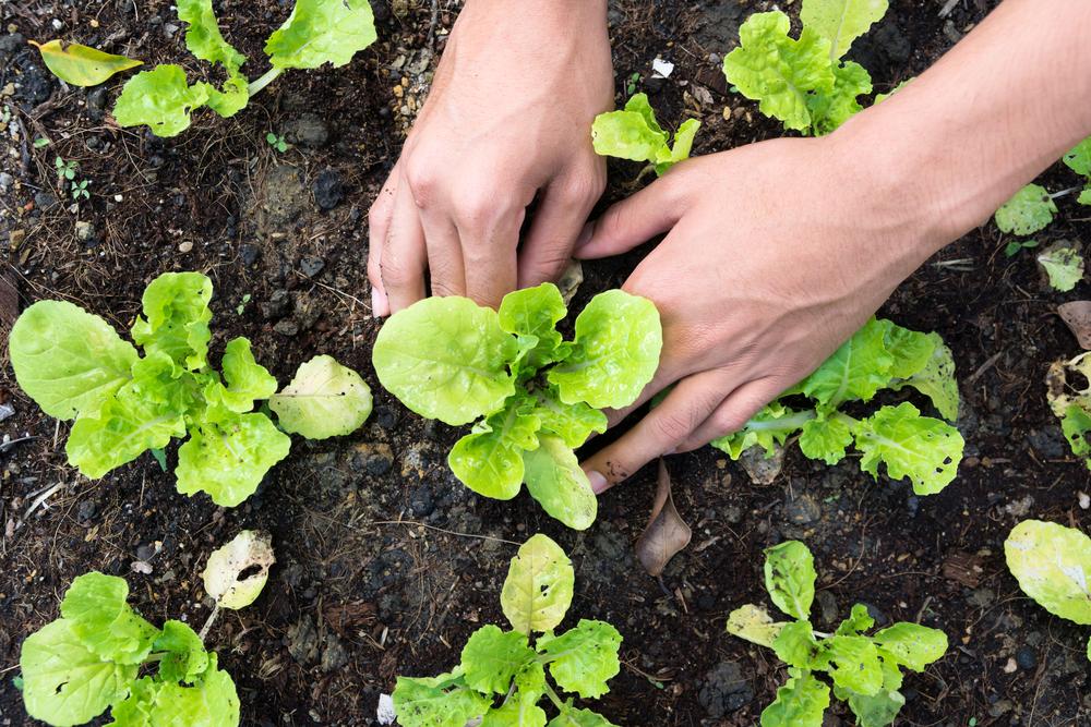 Nachtvorst: bescherm je planten
