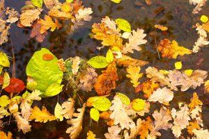 Bladeren in vijver