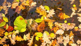 Pas op met bladeren in de vijver