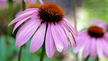 Beperk tuinklusjes met de juiste plantenkeuze