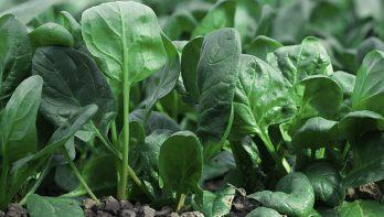 Verse groenten in koude maanden