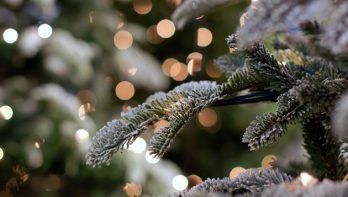 Welke kerstboom past bij jou?