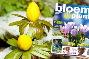 Bloem & Plant januari 2013