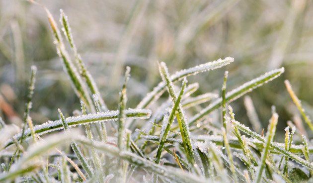 Gazon bij vorst: pas op en voorkom schade aan het gras