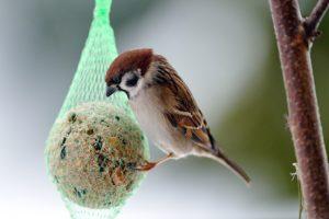 kerstdis vogels