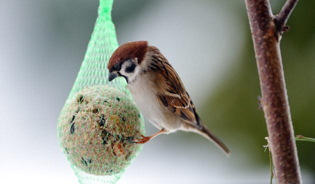 Kerstdis voor tuinvogels