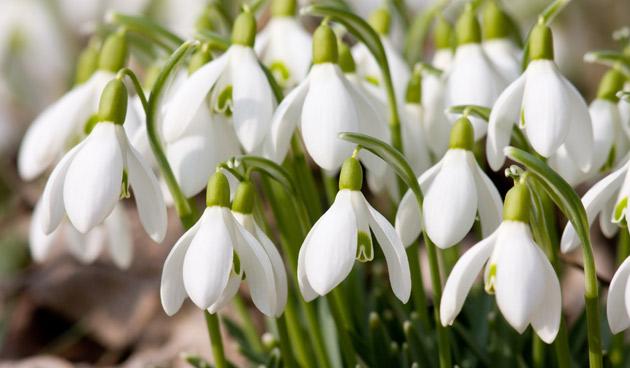 17 tips voor de wintertuin