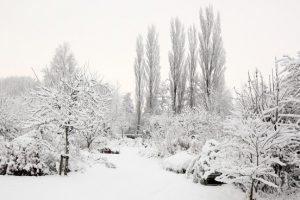 Tuin sneeuw