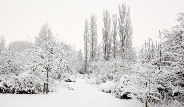 Pas op met besneeuwde bomen