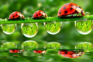 Natuur in tuin