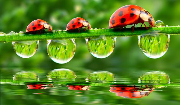 6 Tips voor natuur in de tuin