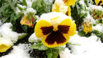 Kleurig winterterras