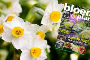 cover maart BP
