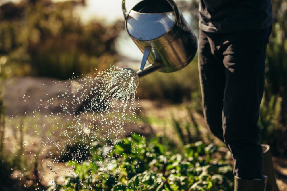 Gieter, moestuin, water geven, TuinSeizoen