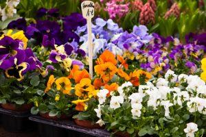 Lentefris terras met voorjaarsbloeiers