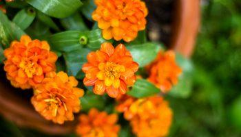 Oranje bloemen in de tuin