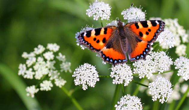 Vlinders vliegen uit