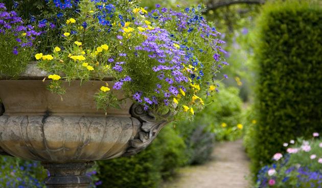 Planten toppen voor een rijke bloei