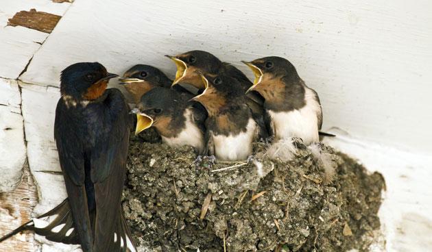 Jonge vogels vliegen uit