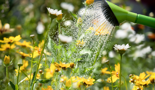 Volop zomer: geef planten in potten en bakken regelmatig water