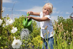 Gieten en sproeien tijdens zomerse dagen