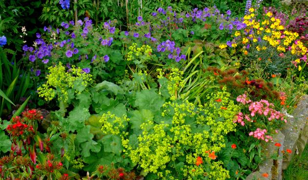 Borderplanten terugknippen voor tweede bloei