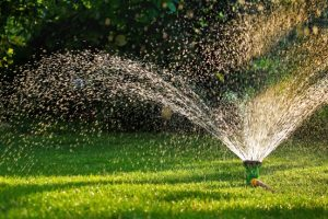 Af en toe sproeien is voldoende om je tuin mooi te houden