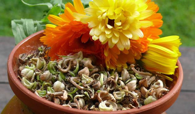 Zaden verzamelen voor volgend jaar