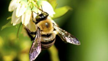 Bloembollenpakket voor bijen