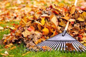 Van herfstblad kun je heel eenvoudig waardevolle bladcompst maken