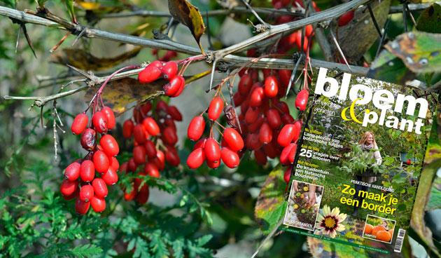 Bloem & Plant november 2013