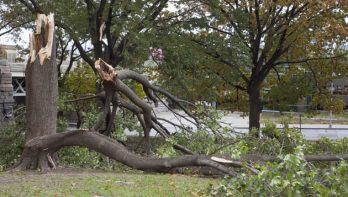 Stormschade in de tuin herstellen