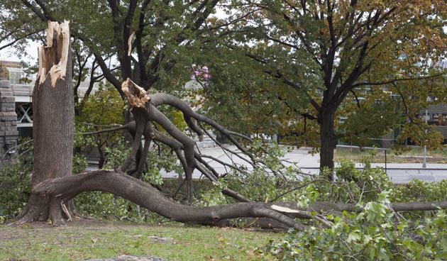 Stormschade in de tuin?