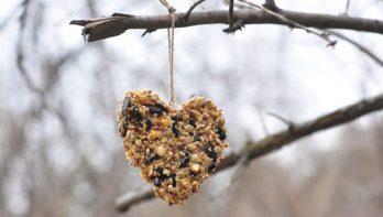 Feestelijke hangers vol vogelvoer