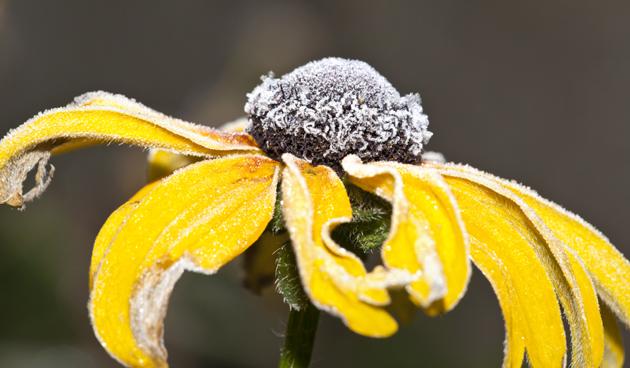 Warm wintersilhouet