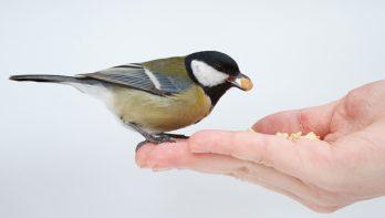 Verantwoord vogels voeren