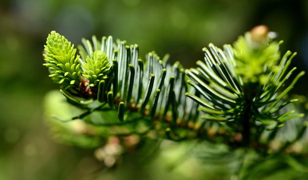Hergebruik je kerstboom in januari