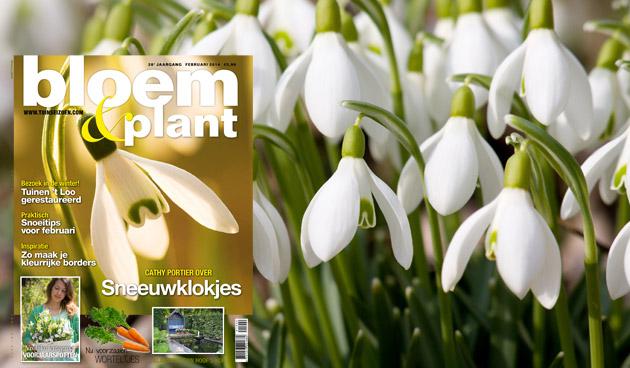 Bloem & Plant februari 2014
