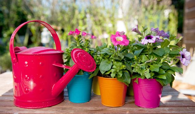 Kleur je tuin!